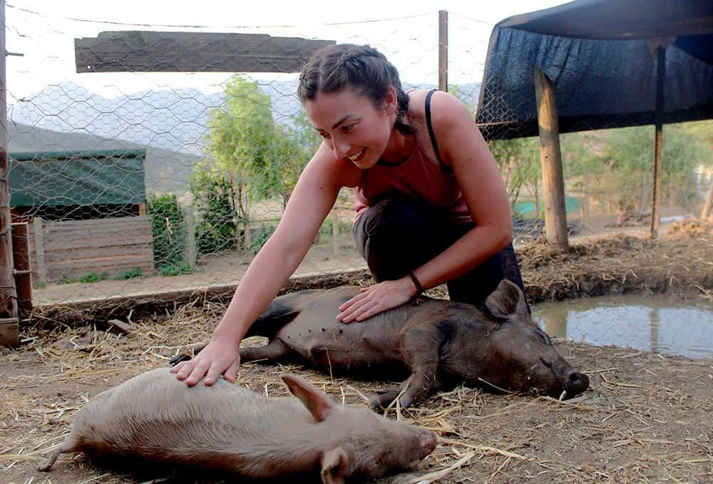 Greyton Farm Sanctuary volunteer