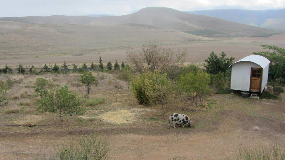 Greyton Farm Sanctuary Shepherds Hut
