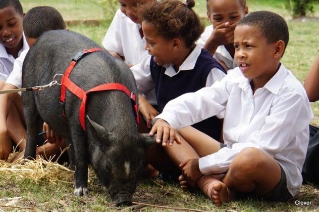 Greyton Farm Sanctuary Humane Education Programme