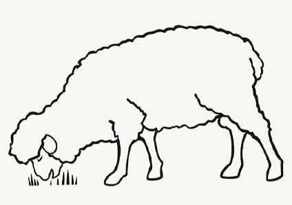 Greyton Farm Sanctuary Sheep Drawing